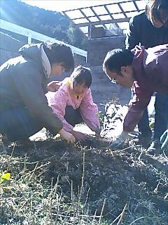 贅沢な植樹 Gorgeous tree planting