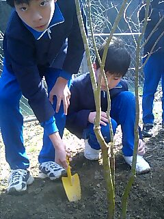 大歩危峡下名小学校での植樹 Tree planting at Shimona elementary school,Ohboke