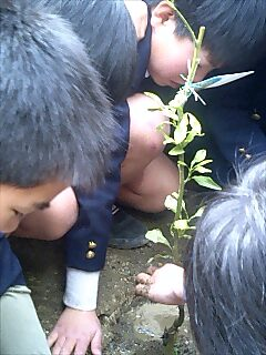 鳴門教育大学付属小学校での植樹 Tree planting at elementary school in Tokushima city