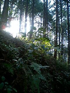 熊野古道の旅12 Journey of Kumano ancient road12