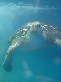 亀2 Turtle2