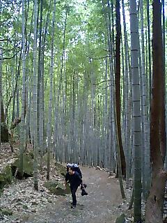 竹林を歩く Walk in bamboo woods