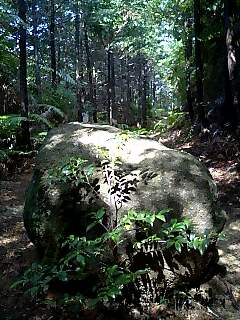 熊野古道、光と影 Kumano ancient road, light and shadow