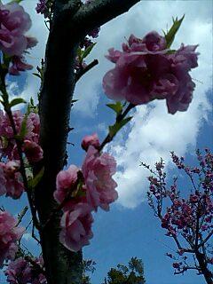 春が来た5 Spring has come5