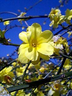 春が来た1 Spring has come1