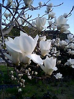 春が来た2 Spring has come2