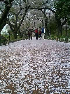 桜道 Cherry road