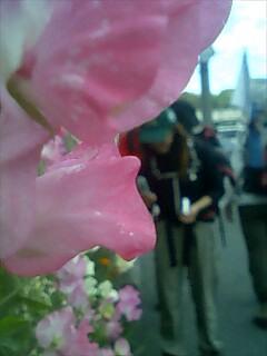 花休憩 Flower rest