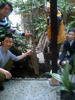 大田区の旅館観月で植樹 Tree planting at Kangetsu Inn, Ota word Tokyo