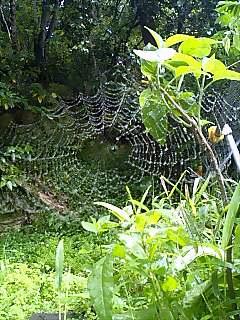 クモ1 Spider1