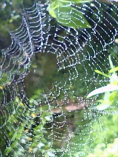 クモ3 Spider3