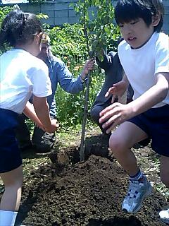 桜を植えました We planted a cherry tree.