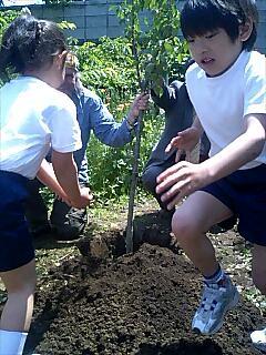 桜を植えました We planted a cherry tree.