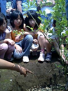 藤沢市羽鳥小学校で講演と植樹 Tree planting and talking at Hatori elementary school