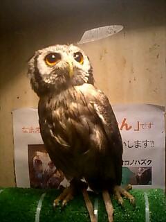 人気者 Popular bird