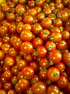 プチトマト putit tomato
