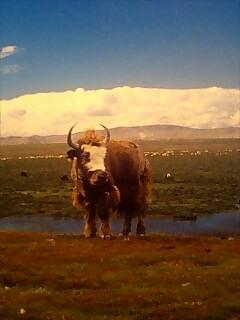チベットの写真 picture from Tibet