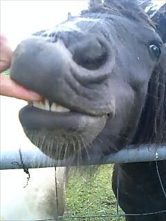 ボニー pony