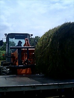 牧草荷揚げ loading pasture