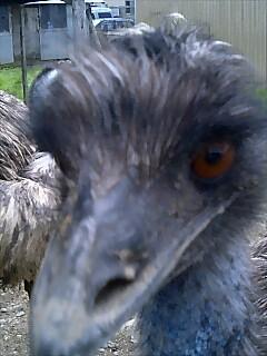 エミュー Emu