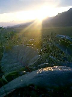 今日の朝日 Today's sun rise