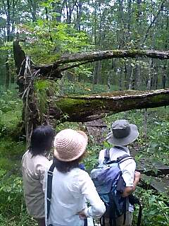 十勝千年の森訪問 Visiting Tokachi millennium forest