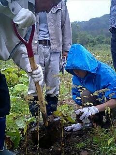 白老町で木を植えましたPlanted trees at Shiraoi town