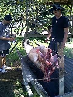 ブッシュピッグの誕生会 bush pig's birthday party