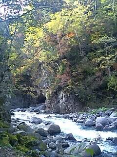 北海道は一足先に紅葉です leaves got colars in Hokkaido