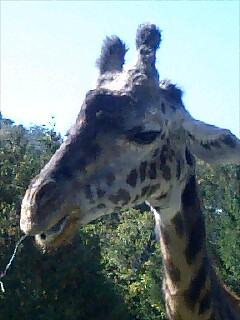 動物園ピクニック Zoo picnic