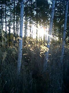 今日の夕日 sunset