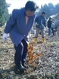 植樹と音楽の祭典 Tree planting and music festival