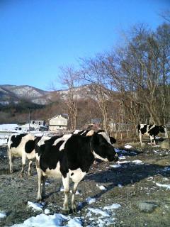 吉塚牧場を訪ねて