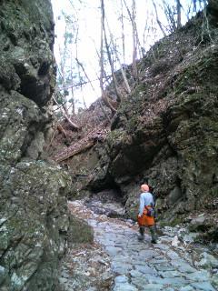 岩手南部を歩く、木を植える。