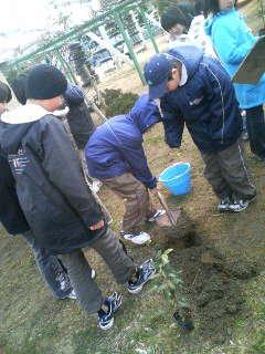 石巻で木を植えました。