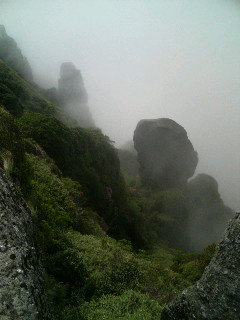 屋久島の山の風景