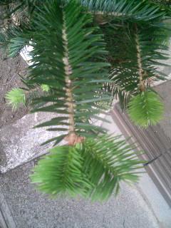 クリスマスチャリティーで植えた木、アースデイで植えた木