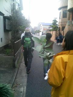 苗木を持って歩いてます。