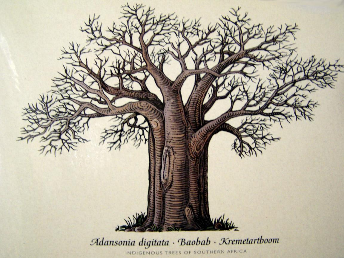 バオバブの木の下で (本出版に向けて・その46)