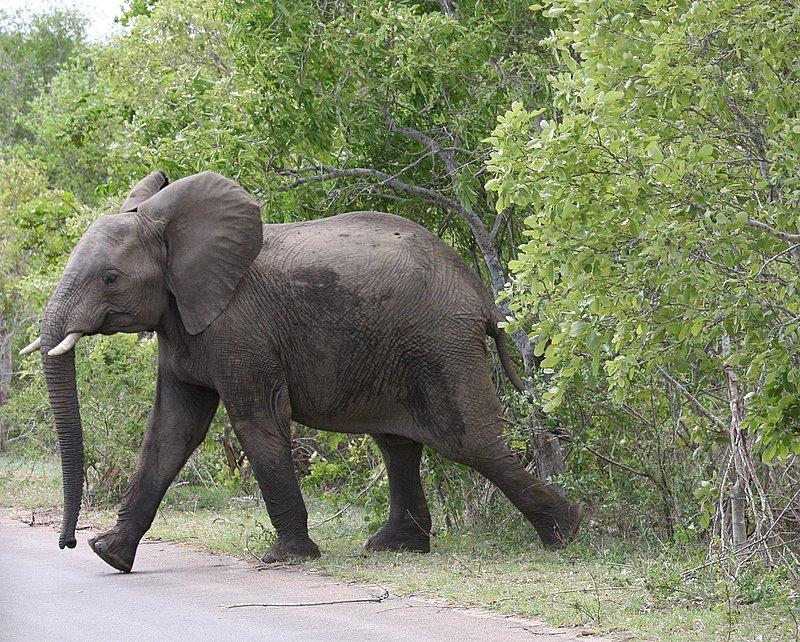 象に追いかけられる(本出版に向けて・その44)