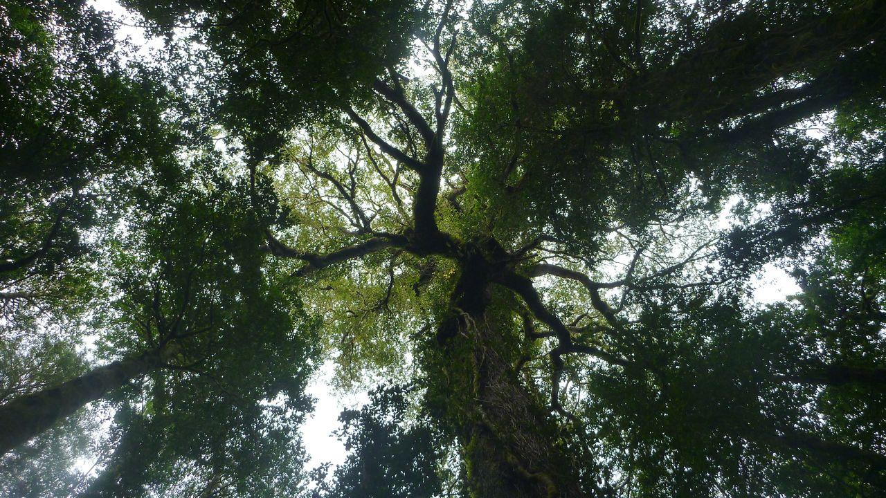 チリ、パタゴニアの森。木が高ーいのね。ジャングルチック。
